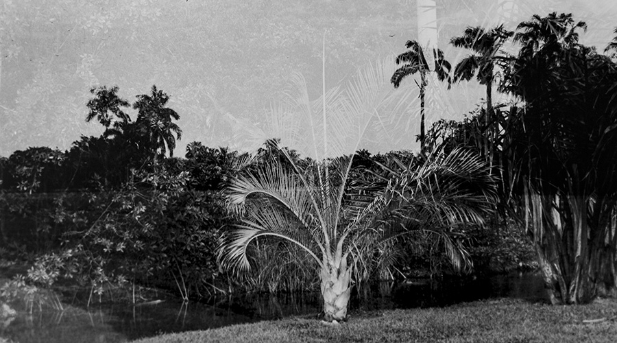 Fairchild Tropical Gardens, 2004, C-print, 16 x 24 inches.