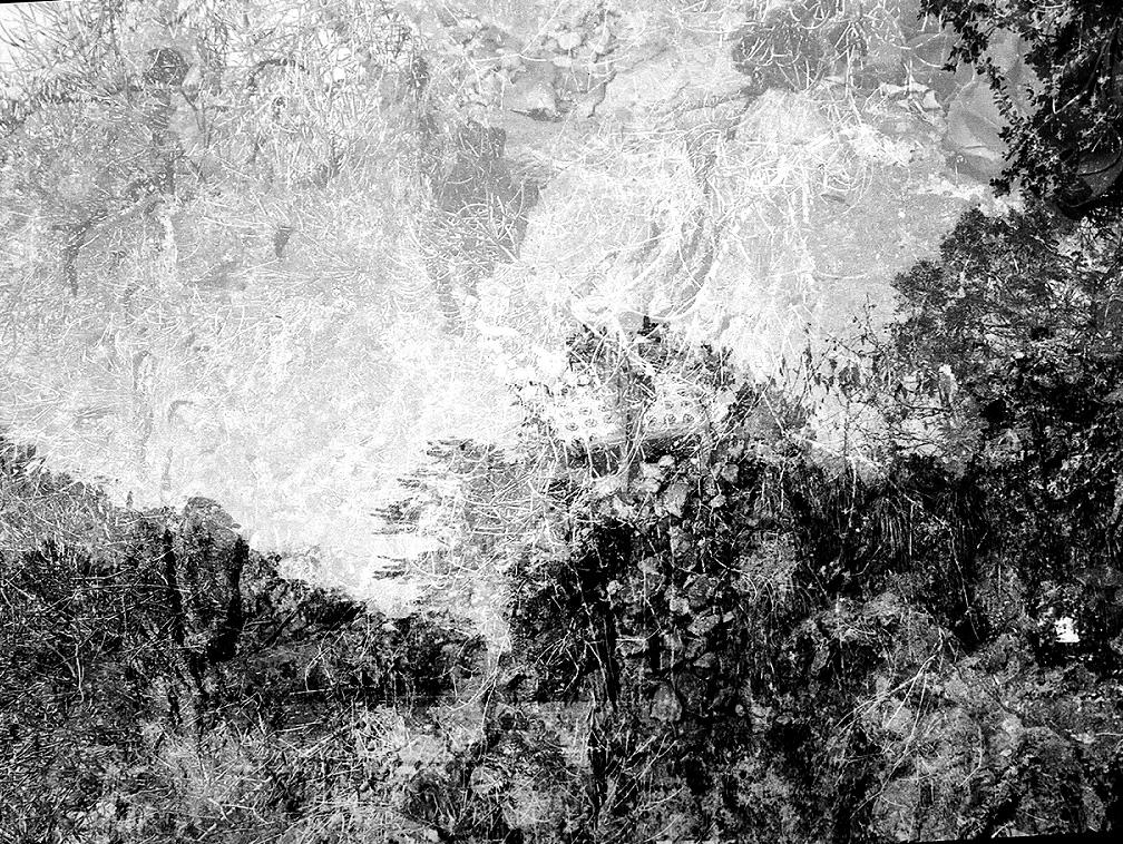 Fairchild Tropical Gardens, 2004, C-print, 16 x 24 inches.